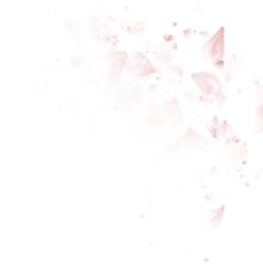 Cherry blossom petals EPS 10 vector image
