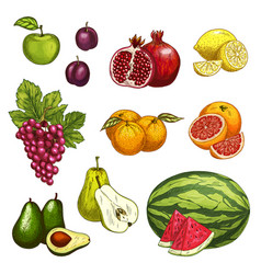 fruit sketch of fresh sweet berry for food design vector image
