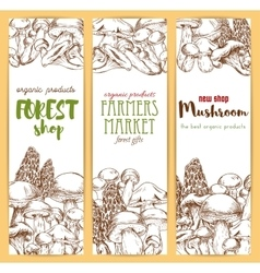 Mushrooms sketch banners set vector
