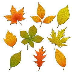 Set with leaves vector