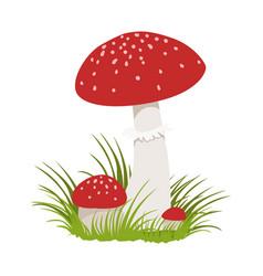 amanita muscaria poisonous mushrooms colorful vector image