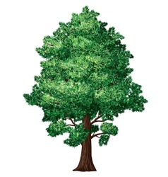 Foliage tree vector