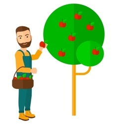Farmer collecting apples vector image