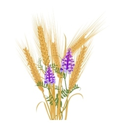 Ears of wheat tied with wildflowers bird vetch vector image vector image