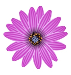 Purple flower isolated on white vector