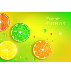 Orange lemon lime and grapefruit vector