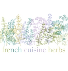 Herbs of provence vector