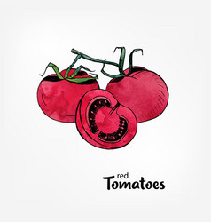 Red tomatoes on a branch whole and part in a cut vector