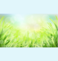 Grass glare and effect bokeh vector