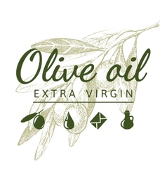 olive branch with logo vector image vector image