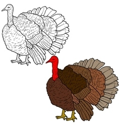 Sketch black turkey on a white background vector image