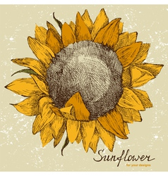 sunflower fower vector image