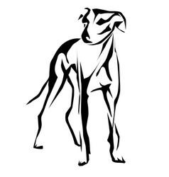 greyhound vector image vector image