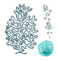 hand drawn aquatic coral doodle vector image vector image