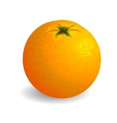 Bright orange on white background vector image vector image