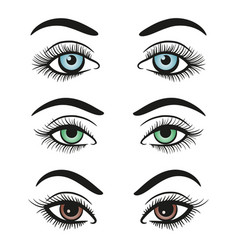 Basic colors female eyes and brows vector