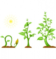 Plant growth vector
