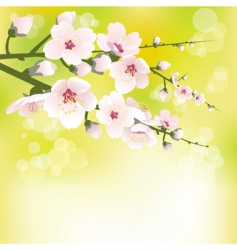 spring blooming vector image vector image