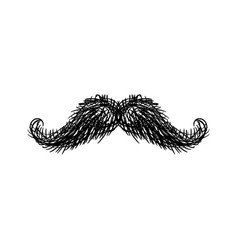 Mustache isolated facial hair on white background vector