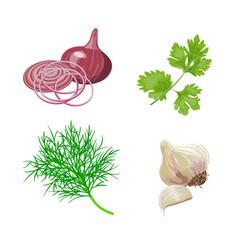onion garlic set vector image