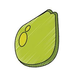 avocado fresh vegetable vector image vector image