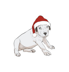 dog-baby boxer vector image
