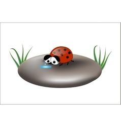 Sad ladybug on a stone isolated vector image vector image