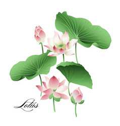 Set of hand drawn lotus flowers and leaves vector