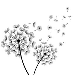 White background with two stylized black dandelion vector