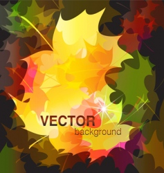 leaves maple vector image vector image