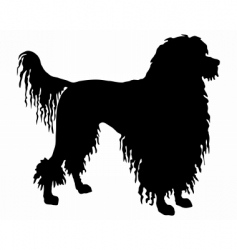Portuguese water dog vector image vector image