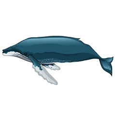 Whale swimming on white background vector image vector image