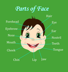 Cartoon child boy vocabulary of face parts vector