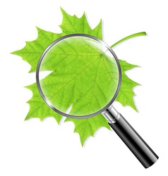 Magnifing glass with green leaf vector