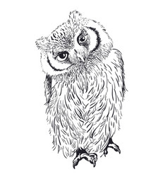 owl hand drawn black and white vector image