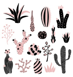 Pink cacti 2 vector