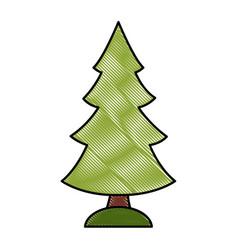 Tree pine isolated vector