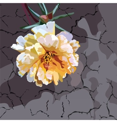 Beautiful Watercolor Cream Yellow flower vector image