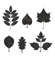 Grunge leaves silhouete set 01 vector