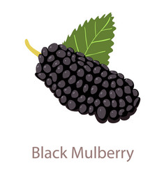 Black mulberry icon isometric 3d style vector