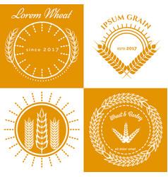 Grain ears concept logo design collection vector