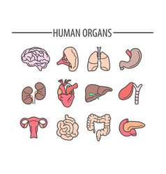 Human organs medical flat isolated icons vector