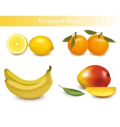 set of tropical fruit vector image vector image