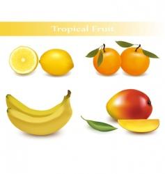 Set of tropical fruit vector