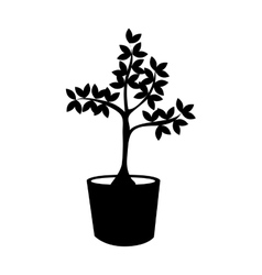 plant in pot tree nature icon graphic vector image