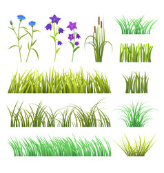 green grass herb and flowers nature vector image