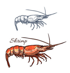 Shrimp isolated sketch icon vector