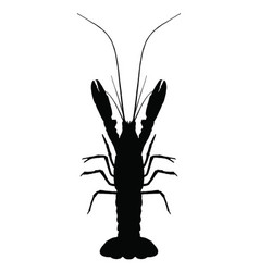 Graphic lobster on white background vector