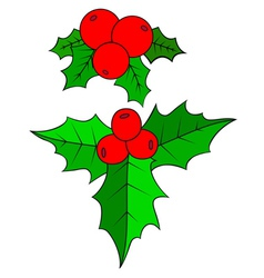 Christmas holly berry vector