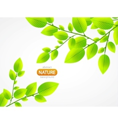 abstract green leaves vector image vector image